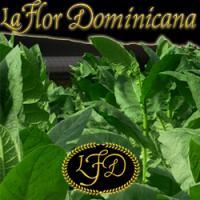 La Flor Dominicana Cigar
